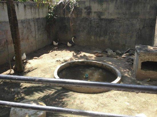 Phuket Zoo: Poor birds :(