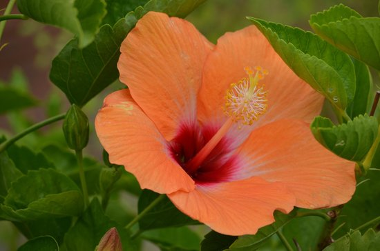 Snug Harbor Cultural Center: Flower detail Snug Harbour Gardens