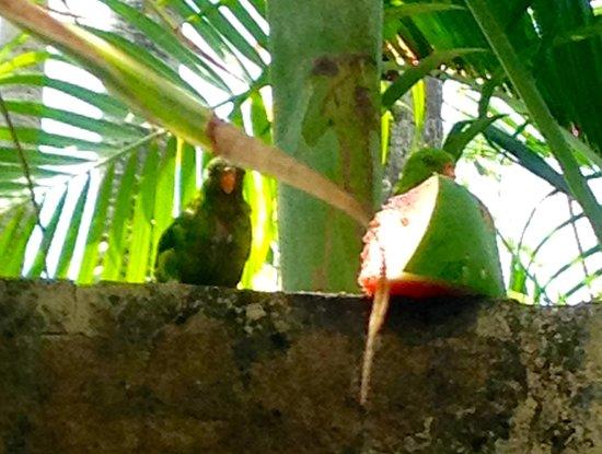 Villa Selina : Rare birds