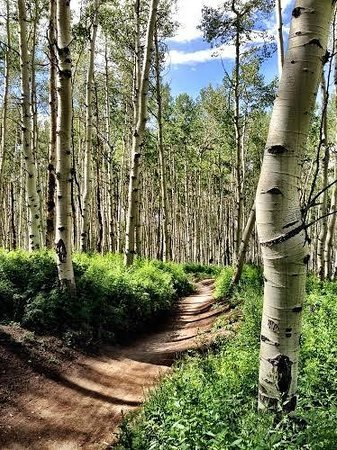 Vail Mountain Resort: Vail MTN Bike Trail Cruising