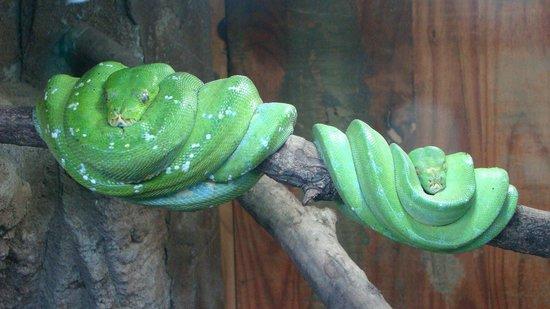 Perry's Bridge Reptile Park: Lazy Snakes