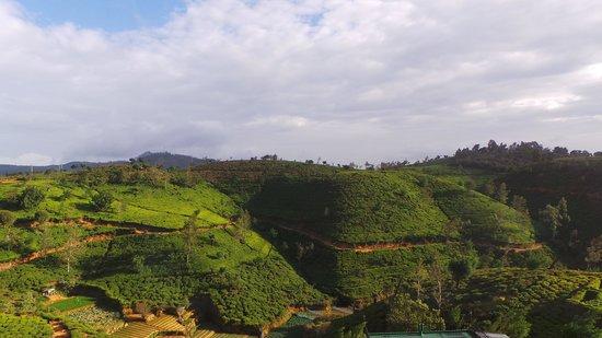 Heritance Tea Factory : Surrounding scenery