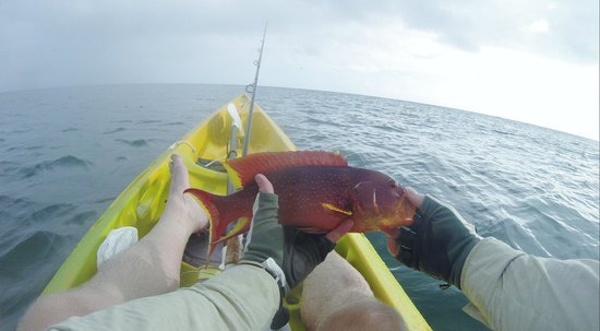 Desroches Island : Beautiful fish caught of Kayak
