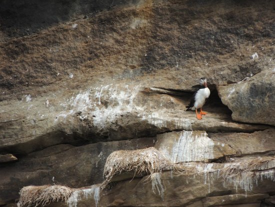 Donelda's Puffin Boat Tours: Puffin