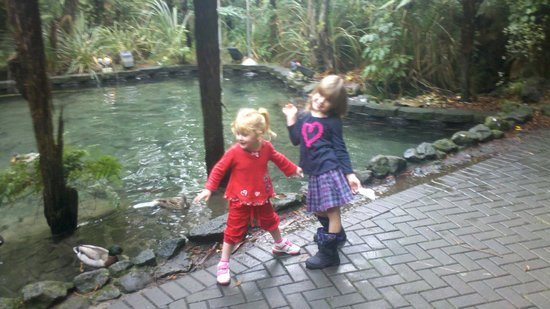 Rainbow Springs Nature Park: Feeding ducks
