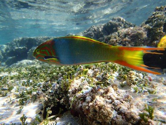 Castaway Resort: Snorkel in front of the resort