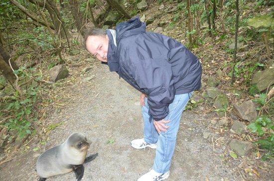 Ohau Stream Walk: Very cute seal pup