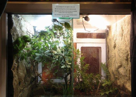 Chameleon unit lights on Exmoor Zoo