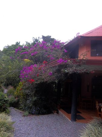 Boquete Garden Inn: Magnificent flowers
