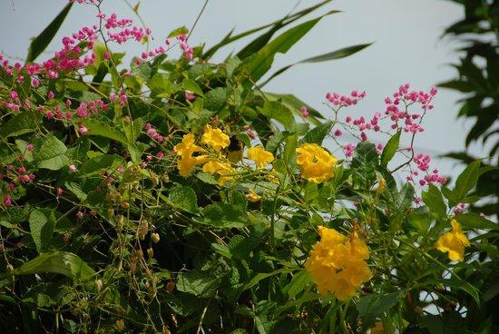 Bill Resort : цветы в отеле