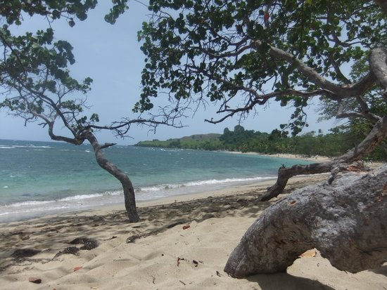 ClubHotel Riu Bachata: The trees on the beach