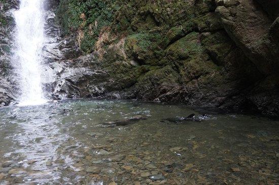 Ohau Stream Walk: cute seal pups playing at waterfall