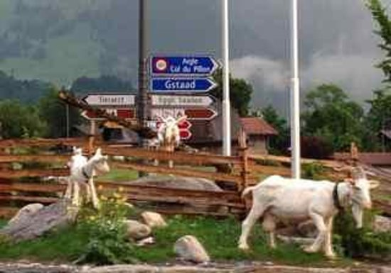 ‪‪Gstaad Saanenland Youth Hostel‬: HI sign behind the goats‬