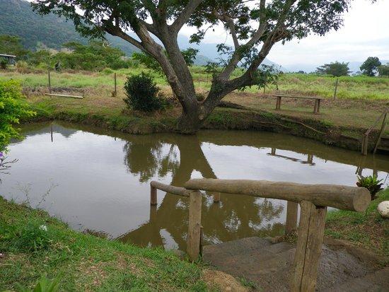 Sabeto Hot Springs and Mud Pool: Mud pool