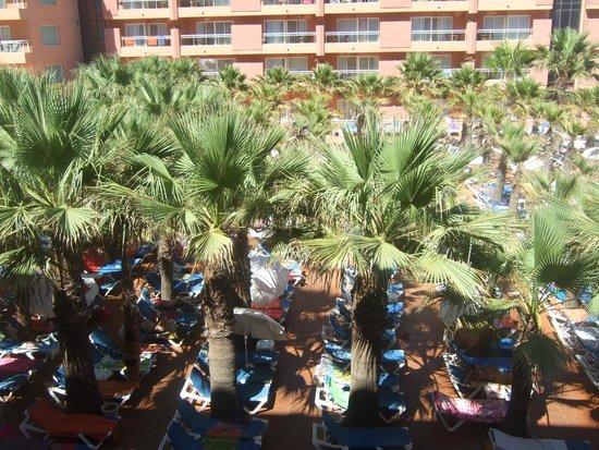 Playaluna Hotel: Palmeras de la piscina