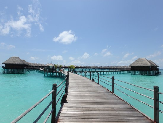 Sun Aqua Vilu Reef : 水上コテージ