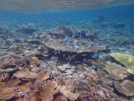 Sun Aqua Vilu Reef: 水族館のような景色
