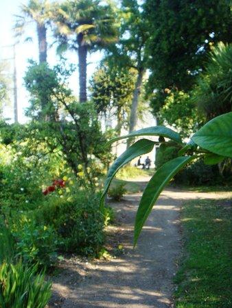 Villa Saint Raphaël : Une vue du magnifique jardin arboré