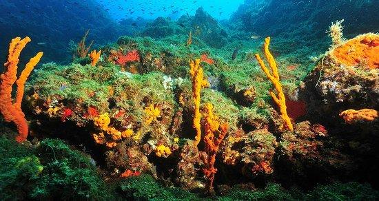 Tropea Diving