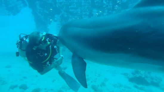 Dolphin Reef: Diving with Dolphins_1