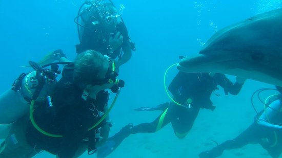 Dolphin Reef: Diving with Dolphins_3