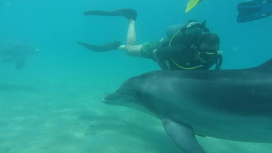 Dolphin Reef: Diving with Dolphins_2