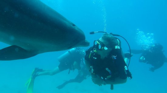 Dolphin Reef: Diving with Dolphins_4