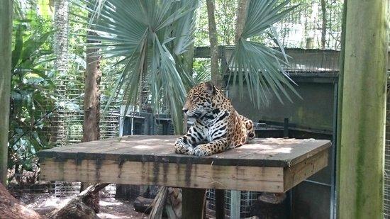 Brevard Zoo: .
