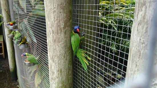 Brevard Zoo : .