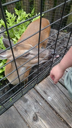 Brevard Zoo : Feeding the deer