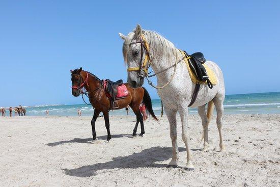 IBEROSTAR Mehari Djerba: cavalli in spiaggia