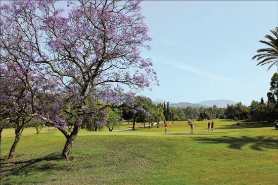 El Paraíso Golf Club: View of the 4th hole with Jacaranda Tree