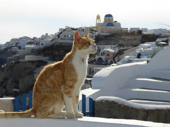 Aspa Villas: Friendly neighbourhood cat
