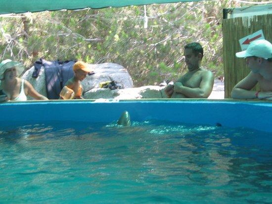 Aqualand & Dolphinland: акула