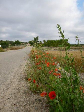 Finca Son Jorbo: Cami de s'Olivar wild flowers