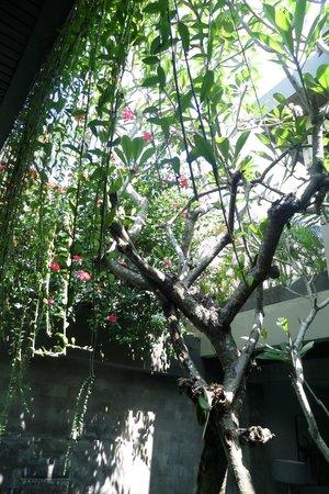 Kanishka Villas : Overhanging garden over the pool.