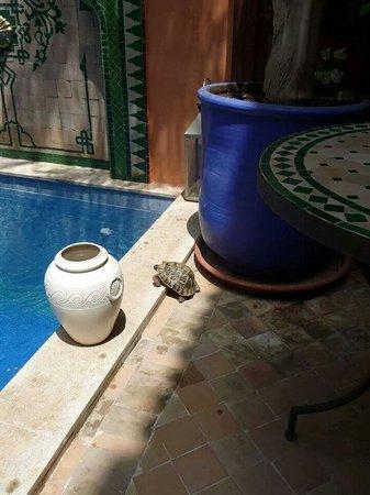 Riad Caesar : Resident Tortoise!!