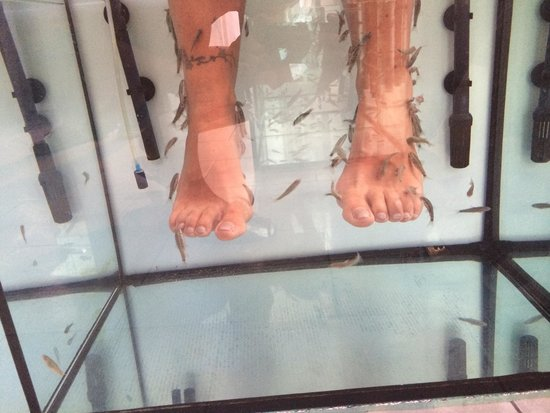 Lovely pedicure picture of paros fish therapy pounta for Fish pedicure near me