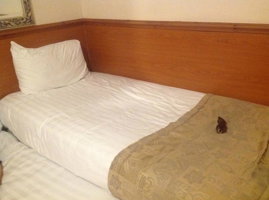 Holiday Villa Hotel and Suites London: Hard but ok bed