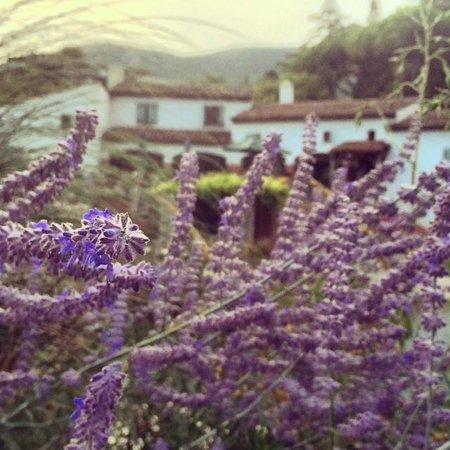 Mas la Jaina : Heaven in Provence