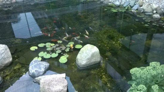 Causeway Bay Lansing Hotel: pond