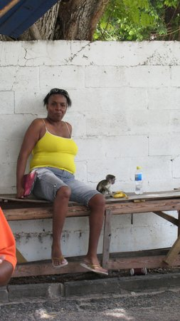 Hilton Barbados Resort: A local outside Cuzz's with a wee monkey!