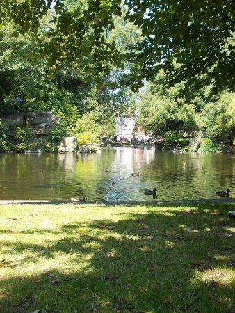 Parque St Stephen's Green: Ducks, trees and water.