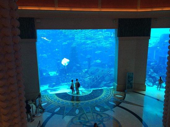 Atlantis, The Palm : Acquario