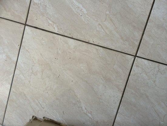 Kefalonitis Hotel Apts.: Bathroom floor ants