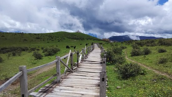 Yulong (Jade Dragon) Mountain: Wooden path and Yaks on Yak Meadow