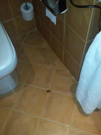 Domina Coral Bay Prestige Hotel: bagno