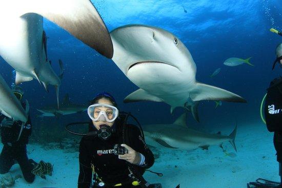 Stuart Cove's Dive Bahamas: Shark Feeding - Bahamas