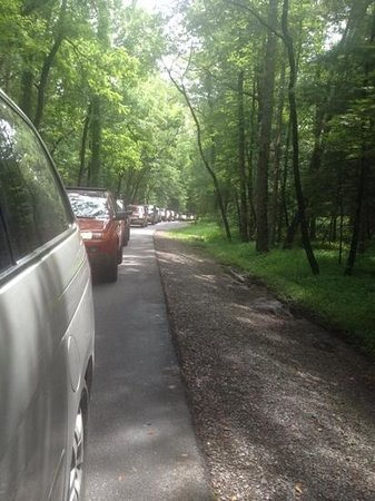 Cades Cove Visitor Center: Traffic in Cades Cove