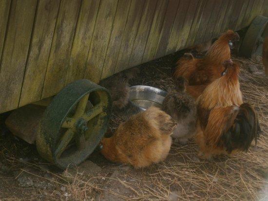 Prospect Farm: Animals!